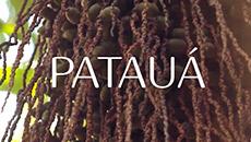 Ekos | Pataúa | Crecimiento y fuerza del cabello