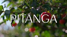 Ekos | Pitanga | Fragancia refrescante
